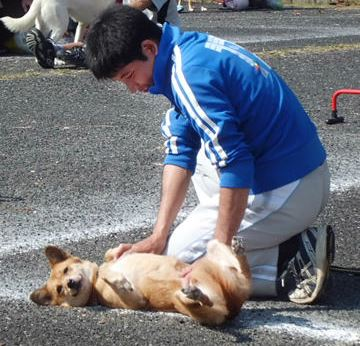 dogschoolsue
